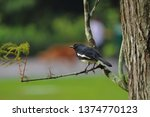 a black sparrow on the tree... | Shutterstock . vector #1374770123