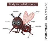 diagram showing body part of... | Shutterstock . vector #1374796670