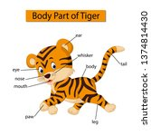 diagram showing body part of... | Shutterstock .eps vector #1374814430