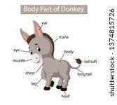 diagram showing body part of... | Shutterstock .eps vector #1374815726