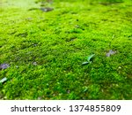 Green Moss Forming A Thick...