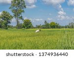 editorial use only  a farmer... | Shutterstock . vector #1374936440