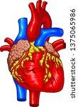 vector medical illustration of... | Shutterstock .eps vector #1375065986