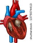 vector medical illustration of... | Shutterstock .eps vector #1375074413