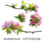 spring branch of flowers... | Shutterstock . vector #1375126166