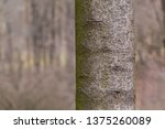 close up of trunk of tree in... | Shutterstock . vector #1375260089