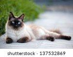 The Beautiful Brown Cat ...