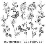 hand drawn butterflies  bees... | Shutterstock . vector #1375409786