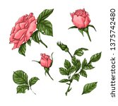 set of coral roses. hand... | Shutterstock .eps vector #1375742480