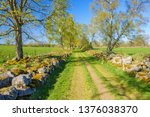 old cattle path in a lush rural ... | Shutterstock . vector #1376038370