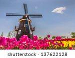 Netherlands Field