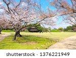 blossoming sakura in koishikawa ...   Shutterstock . vector #1376221949