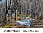 deciduous forest in spring with ... | Shutterstock . vector #1376269163