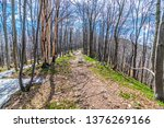 deciduous forest in spring with ... | Shutterstock . vector #1376269166