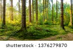 a wonderful forest in the... | Shutterstock . vector #1376279870