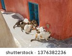 Group Of Stray Cats Eating Dry...