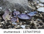 Beautiful Clams On Beach  ...