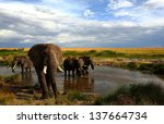 Elephants Drinking By A...