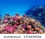 coral reef in egypt as nice... | Shutterstock . vector #1376658506