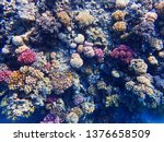 coral reef in egypt as nice... | Shutterstock . vector #1376658509