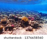 coral reef in egypt as nice... | Shutterstock . vector #1376658560