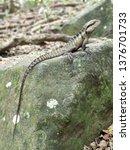 australian water dragon   which ... | Shutterstock . vector #1376701733