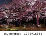 beautiful pink sakura cherry... | Shutterstock . vector #1376916953