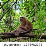 Monkey At Erawan National Park  ...