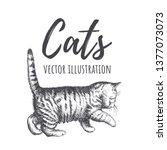 Stock vector kitten walks vector illustration kitten sneaks cat silhouette tabby cat cat cute hand drawing 1377073073