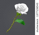 Beautiful White Rose On Long...