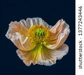 Floral Fine Art Still Life...