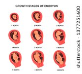 embryo growth stage set with... | Shutterstock .eps vector #1377251600