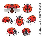 insect ladybird set  cute small ... | Shutterstock .eps vector #1377251603
