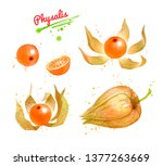 watercolor hand drawn...   Shutterstock . vector #1377263669