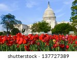 Stock photo washington dc red tulips in front of capitol building united states 137727389