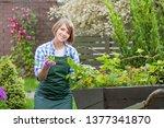 gardener or florist at work....   Shutterstock . vector #1377341870
