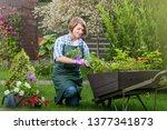 gardener or florist at work....   Shutterstock . vector #1377341873