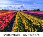 Spring Pastel Colors In Skagit...