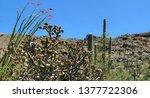 panorama nature desert... | Shutterstock . vector #1377722306