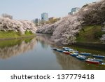 View Of Cherry Blossoms In...