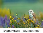 beautiful barn owl perched on a ... | Shutterstock . vector #1378003289