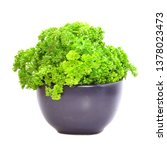 fresh parsley herbs used for... | Shutterstock . vector #1378023473