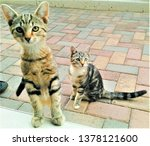 Stock photo cats and kittens 1378121600
