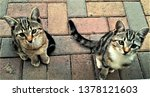Stock photo cats and kittens 1378121603