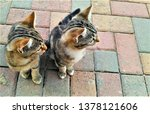 Stock photo cats and kittens 1378121606