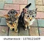 Stock photo cats and kittens 1378121609