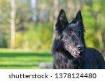 summer portrait of black...   Shutterstock . vector #1378124480