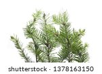 pine branch isolated on white... | Shutterstock . vector #1378163150