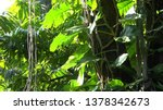 lianas with big leaves on high... | Shutterstock . vector #1378342673