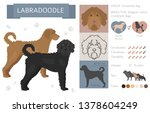 designer  crossbreed  hybrid... | Shutterstock .eps vector #1378604249